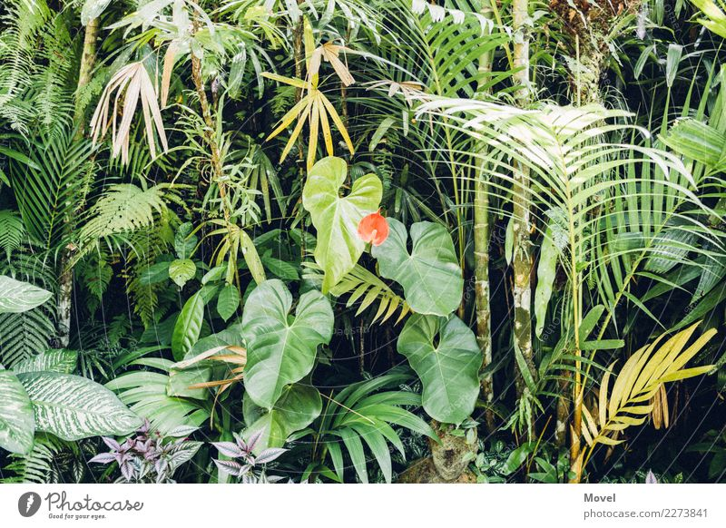 Indonesian Garden Nature Plant Tree Grass Bushes Moss Fern Leaf Blossom Wild plant Exotic Park Virgin forest Island Green Red Adventure Ubud Bali Bamboo