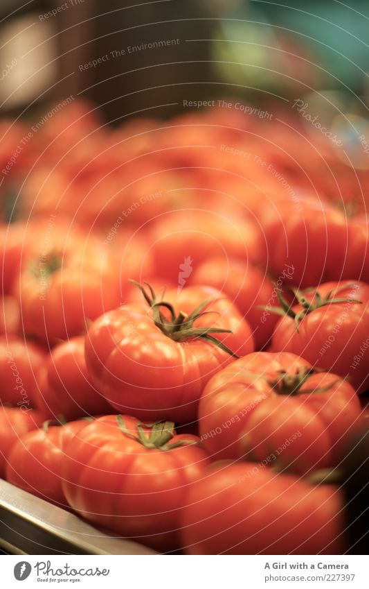 it's time to tomato Food Vegetable Tomato Organic produce Lie Round Red Mature Markets Colour photo Interior shot Deserted Shallow depth of field Many Fresh Raw