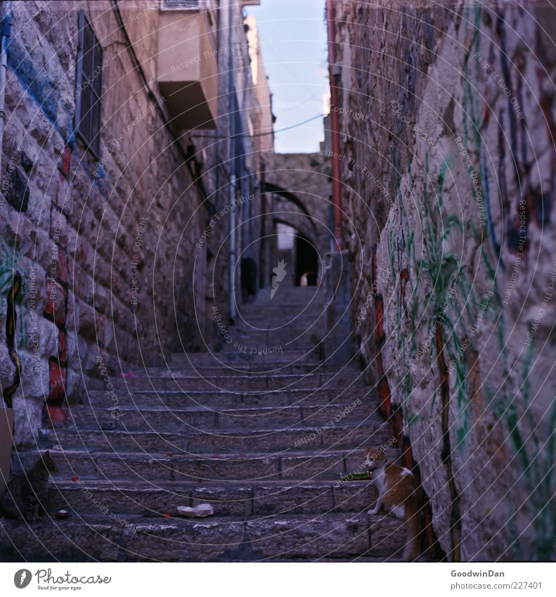 The city of cats Town Old town Deserted House (Residential Structure) Wall (barrier) Wall (building) Facade Animal Cat Dirty Dark Sharp-edged Elegant Gloomy