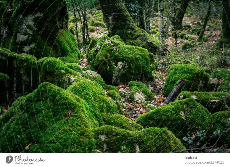 Enchanted forest Nature Plant Landscape Environment Rain Earth Drops of water Environmental protection Moss