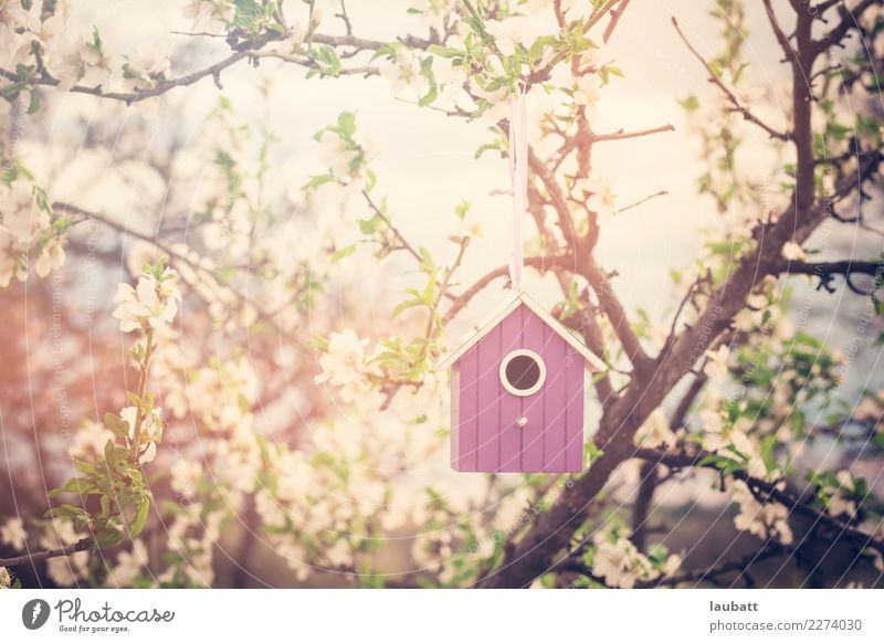 Birdhouse in blossom time Nature Flower Environment Blossom Friendship Peace Environmental protection Cherry tree Almond tree