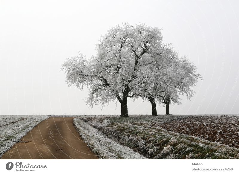 Landscape Tree Winter Street Cold Lanes & trails Snow Field Ice Agriculture Frost Snowscape Home country Hoar frost