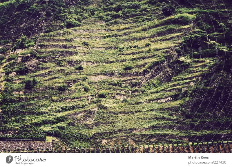 A tendency towards structure Nature Landscape Plant Agricultural crop Hill Rock Mountain Esthetic Wine growing Mosel (wine-growing area) Vineyard Line Stripe