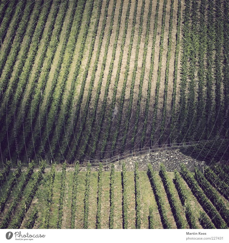 Tendency to structure II Landscape Plant Agricultural crop Hill Wine growing Mosel (wine-growing area) Vineyard Line Stripe Colour photo Subdued colour