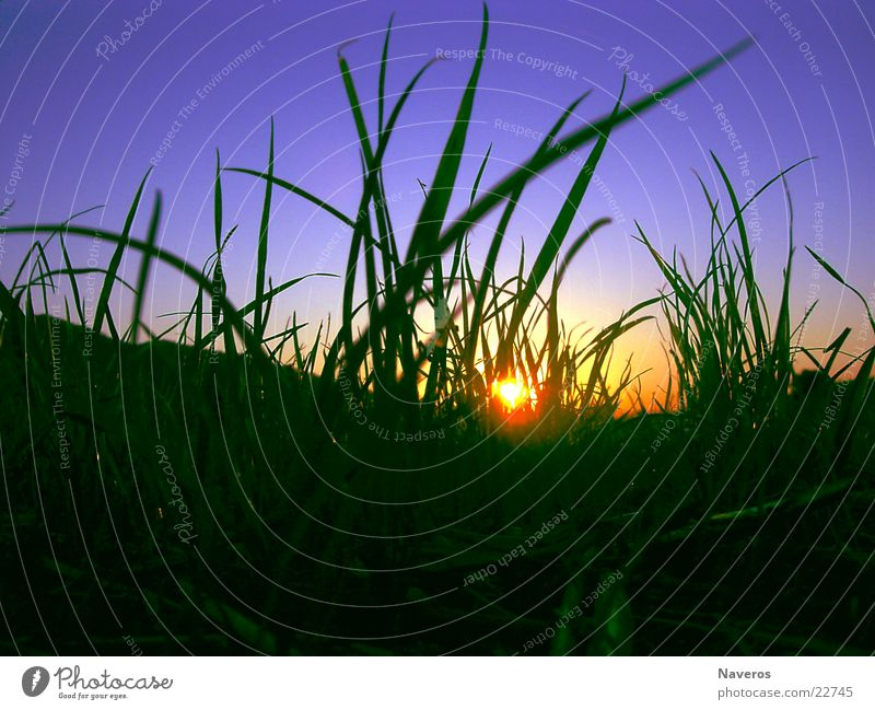 ant's perspective Sun Nature Plant Earth Sky Cloudless sky Sunrise Sunset Sunlight Spring Summer Autumn Beautiful weather Grass Foliage plant Agricultural crop