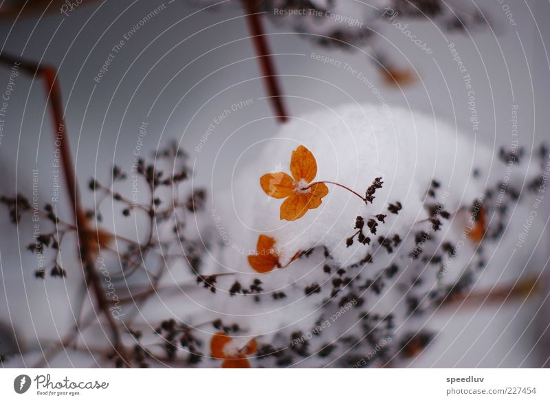 Nature Water Plant Leaf Winter Snow Grass Blossom Sadness Dream Brown Gold Energy Growth Esthetic Bushes