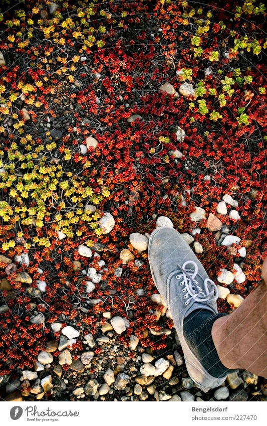tundra Hiking Legs Feet 1 Human being Nature Plant Earth Grass Moss Stockings Footwear Loneliness Environment Multicoloured Stride Stone Tundra Go off Direction
