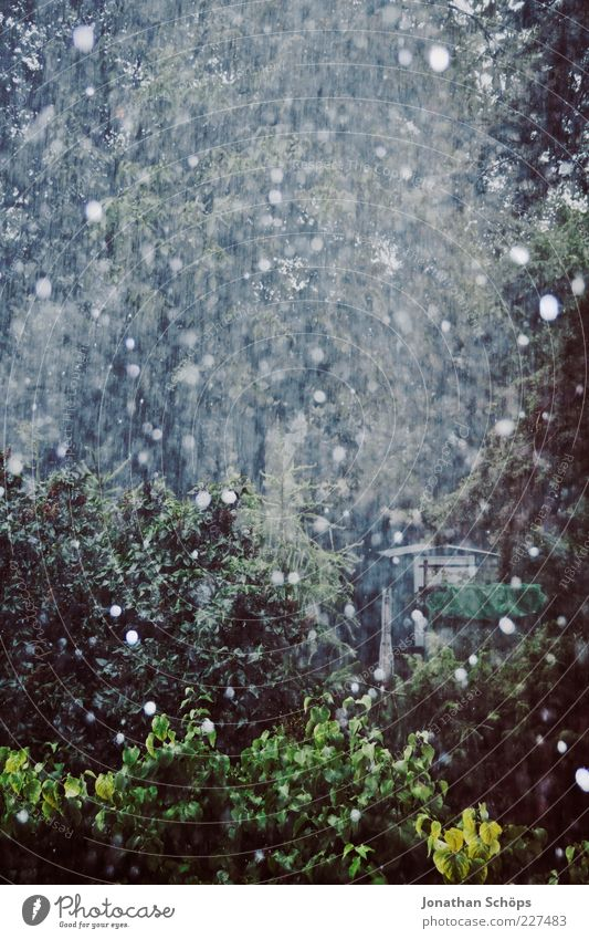 Snow/Rain Nature Air Drops of water Autumn Winter Climate Weather Bad weather Hail Tree Bushes Garden Dark Blue Gray Green Sadness Frustration Embitterment