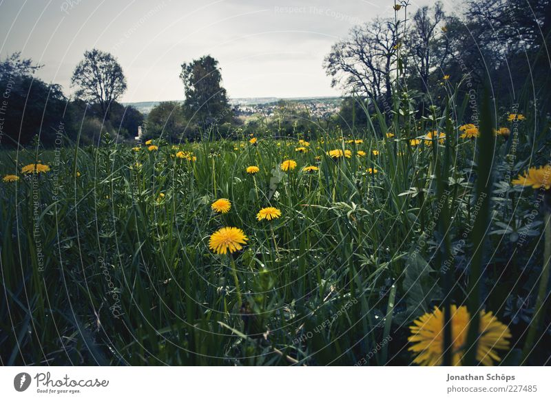 Nature Blue Green Plant Summer Flower Black Yellow Freedom Environment Landscape Emotions Grass Air Horizon Esthetic