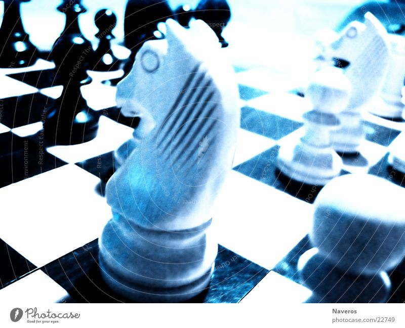Chessmen II Chess piece Horse White Black Playing Planning Board game Leisure and hobbies chess Think Intellect Macro (Extreme close-up)