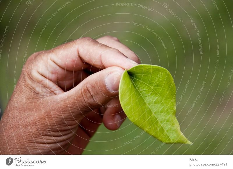Human being Nature Green Hand Plant Leaf Environment Healthy Fresh Fingers Clean To hold on To enjoy Herbs and spices Intoxicant Exotic