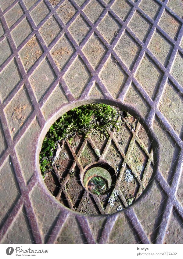 Hole in hole in hole in sheet metal Moss Metal Rust Symmetry Circle Hollow Vista checker plate Iron Pitted Footboard Line Pattern Parallel Consecutively Groove