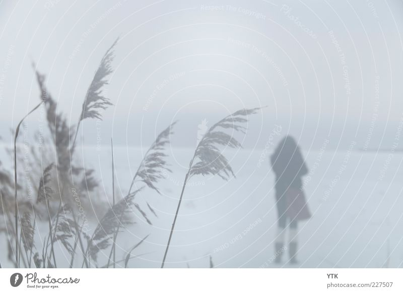 Nature Plant Winter Loneliness Cold Environment Landscape Sadness Air Moody Snowfall Fog Climate Stand Bushes Uniqueness