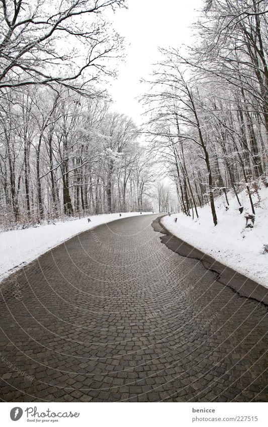 empty Street Lanes & trails Winter Forest Snow Cold Ice Frozen Deserted Empty Expressionless Gloomy Loneliness Background picture Curve Transport Paving stone