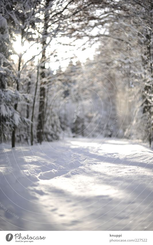 Tracks in the snow Winter Snow Environment Nature Landscape Plant Sunlight Beautiful weather Tree Forest Brown White Ground level Cold Deserted Natural