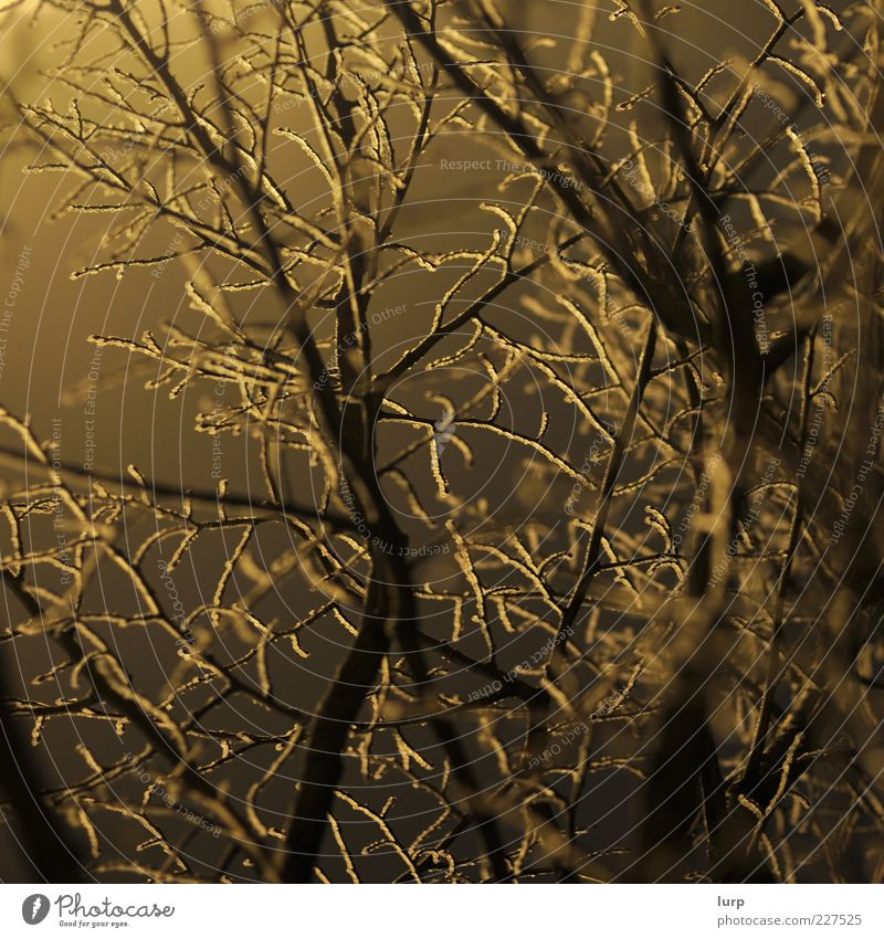 muzzy Environment Nature Plant Winter Tree Bushes Wood Cold Yellow Frost Colour photo Exterior shot Deserted Artificial light Light Shadow Silhouette Back-light