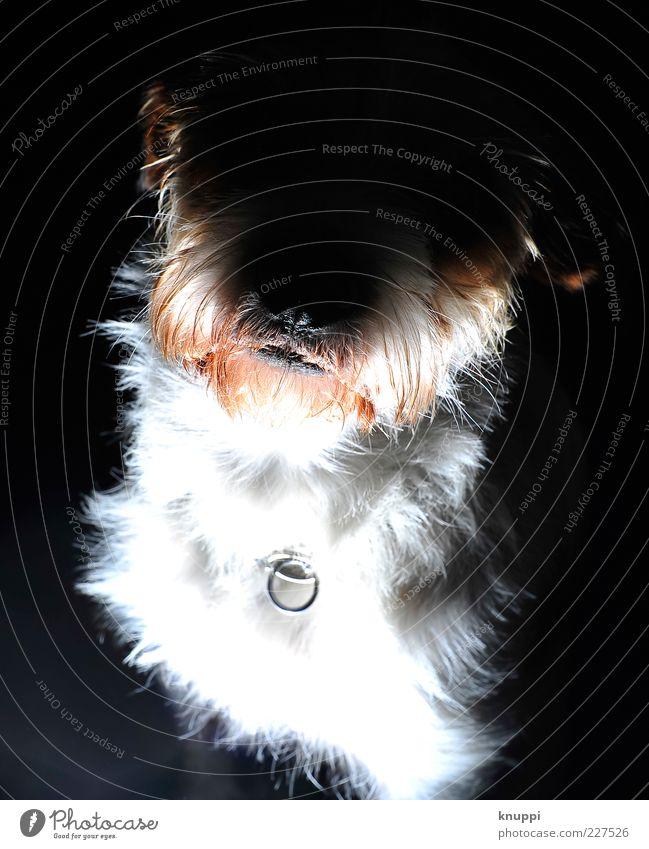 White Red Animal Black Dog Wild Animal face Curiosity Pelt Creepy Pet Brash Dog's snout Puppydog eyes