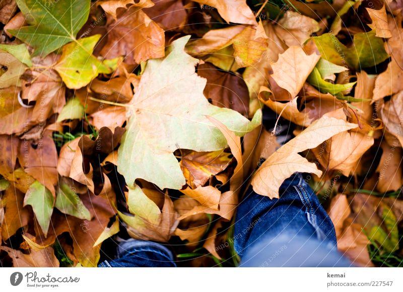 Nature Green Plant Leaf Meadow Autumn Environment Legs Brown Lie Climate Jeans Copy Space Autumn leaves Heap Foliage plant
