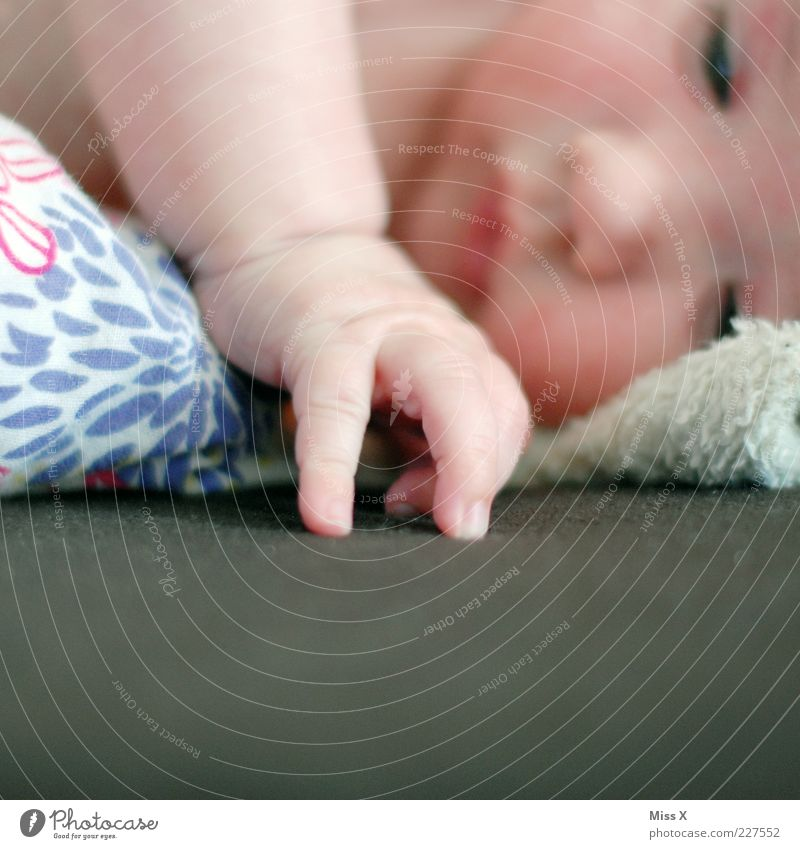 Human being Hand Small Infancy Baby Beginning Lie Fingers Study Sleep Bed Cloth Cute Warm-heartedness Touch Couch