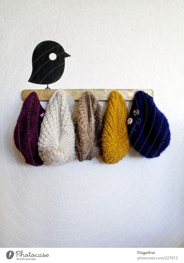 The early bird can use a hat! Cap Hang Bird Accessory Wall (building) Clothing Multicoloured Animal wall tattoo Cold Hang up Decoration Woolen hat