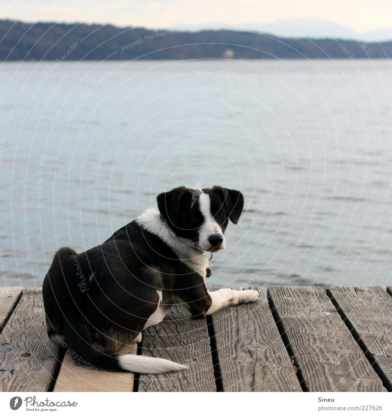 Yes? Water Beautiful weather Lakeside Lake Starnberg Footbridge Jetty Animal Dog Animal face 1 Relaxation Lie Looking Contentment Calm Loneliness Serene Break