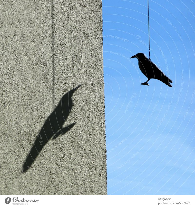 Sky Blue Loneliness Animal Black Wall (building) Environment Gray Wall (barrier) Bird Together Facade Pair of animals Perspective Exceptional Longing