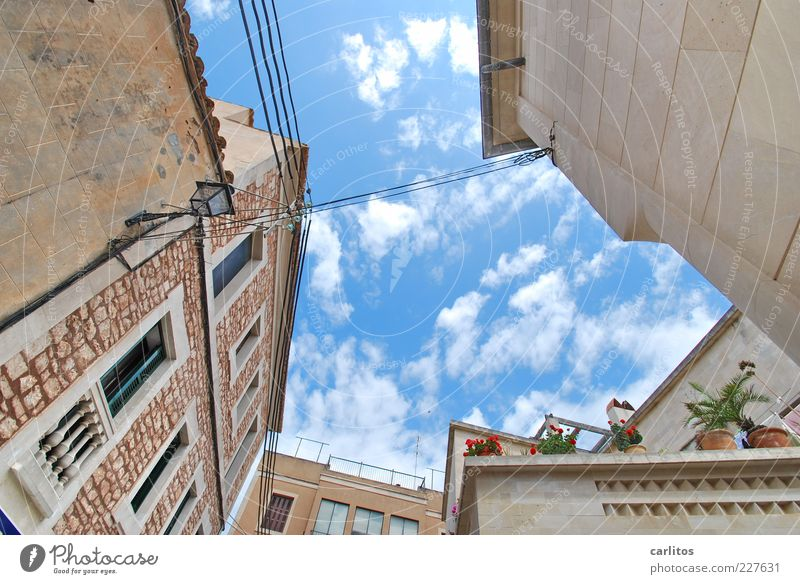 Danger of collapse ? Sky Summer Beautiful weather Plant Pot plant House (Residential Structure) Wall (barrier) Wall (building) Facade Terrace Window Blossoming