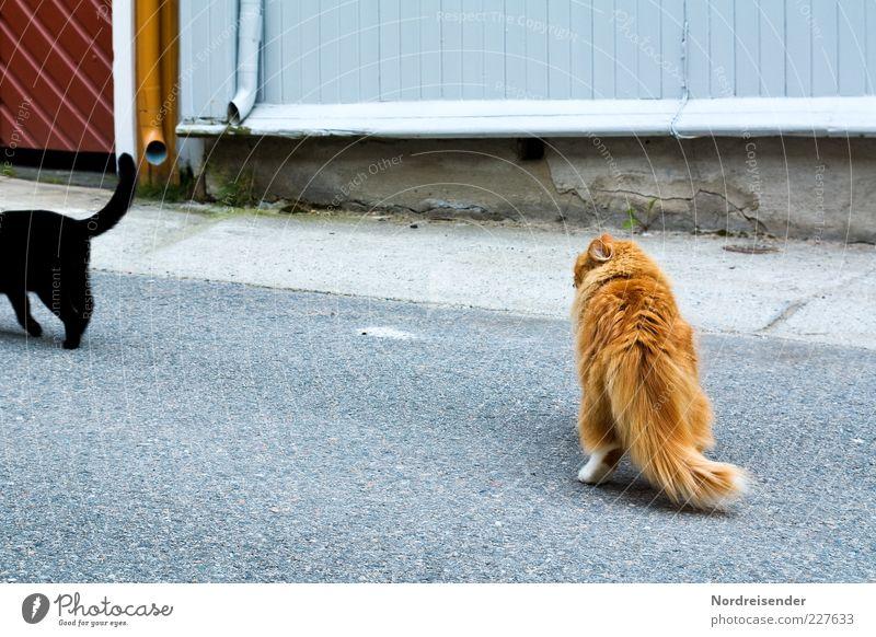 Beautiful Animal Black Street Cat Desire Observe Curiosity Longing Hind quarters Relationship Pet Cuddly Tails Domestic cat