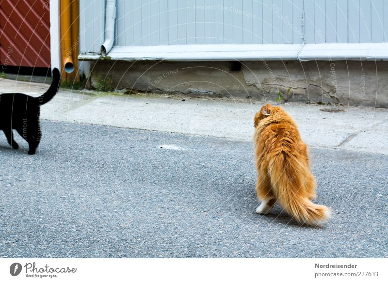Beautiful Animal Black Street Cat Desire Observe Curiosity Longing Hind quarters Relationship Pet Cuddly Tails Domestic cat