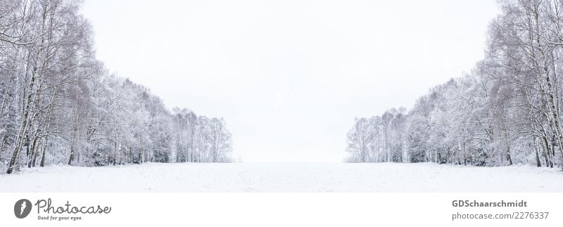 Sky Nature Blue Beautiful White Landscape Tree Calm Winter Forest Environment Meadow Natural Snow Freedom Gray