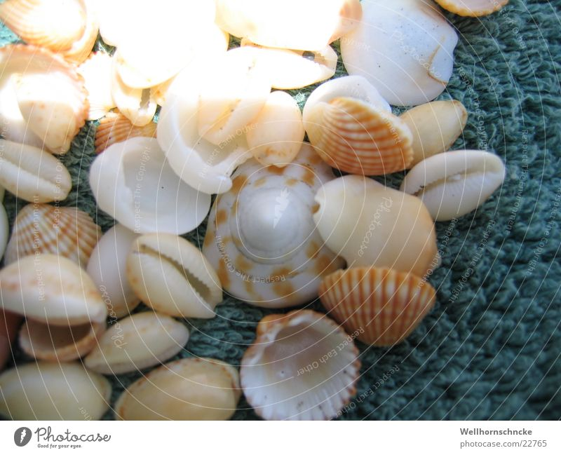seashells Ocean Vacation & Travel Collection Beach find