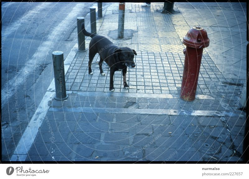 City Animal Street Environment Lanes & trails Stone Sadness Dog Fear Free Wild Lifestyle Gloomy Under Sign Sidewalk