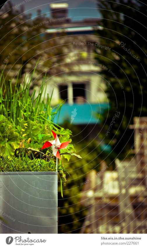 Green Plant Red Summer House (Residential Structure) Relaxation Garden Grass Spring Glittering Decoration Idyll Balcony Stalk City life Beautiful weather