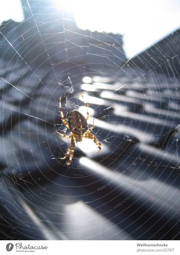 Sun House (Residential Structure) Autumn Fear Small Back Transport Roof Net Spider Crawl Pests August