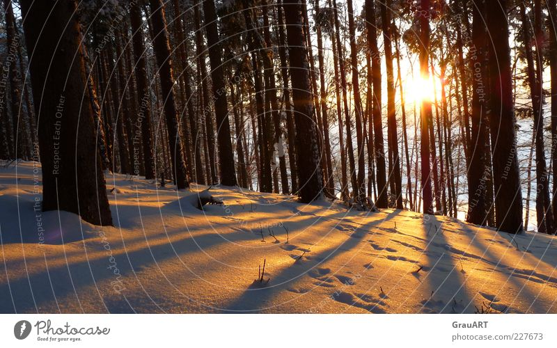 Nature Tree Sun Winter Forest Snow Landscape Moody Hope Hill Longing Tree trunk Anticipation Twilight Sunrise Snow track