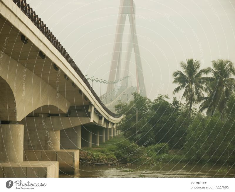 Sky Nature Forest Street Fog Concrete Large Transport Climate Bridge River Virgin forest Traffic infrastructure Palm tree Column Tourist Attraction