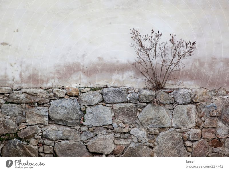 waiting for spring Nature Autumn Plant Bushes Building Wall (barrier) Wall (building) Facade Stone Concrete Old Faded To dry up Growth Simple Dry Brown Gray
