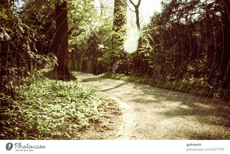 walk in the woods Nature Landscape Beautiful weather Plant Tree Leaf Foliage plant Park Forest Lanes & trails Brown Green Curve Lens flare Calm Exterior shot