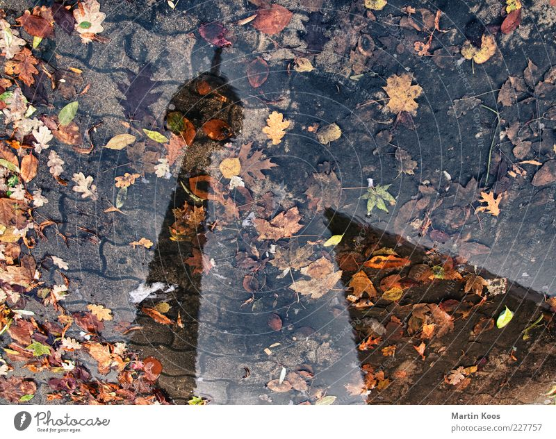 Rain Weather Dirty Wet Landmark Autumn leaves Puddle Capital city Copy Space Berlin TV Tower Mirror image Reflection Water reflection