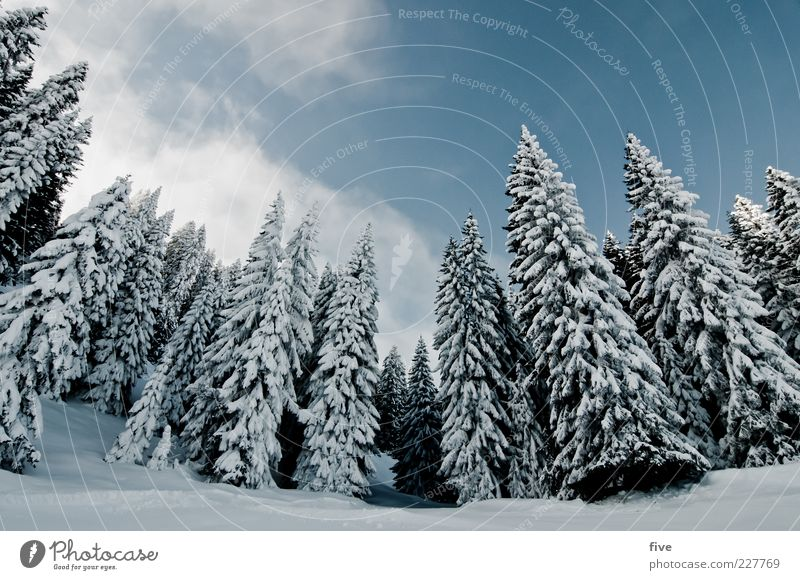 Sky Nature Plant Tree Landscape Clouds Far-off places Winter Forest Cold Snow Rock Earth Tall Hill Alps