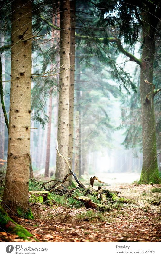 Nature Tree Plant Leaf Forest Environment Landscape Autumn Wood Earth Fog Climate Growth Hope Grief Beautiful weather