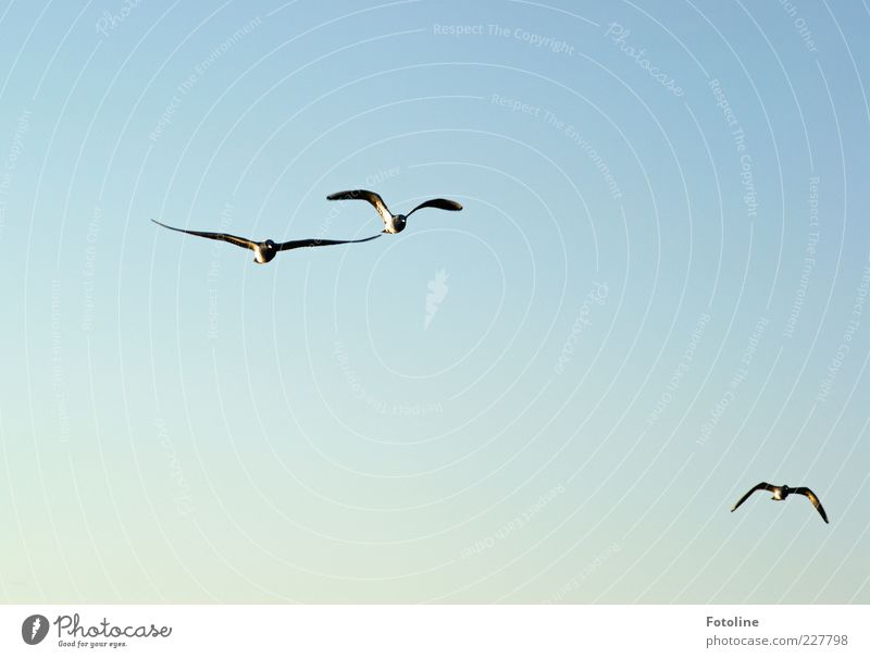 free flight Environment Nature Animal Elements Air Sky Cloudless sky Wild animal Bird Wing Flock Flying Bright Natural Blue Colour photo Multicoloured