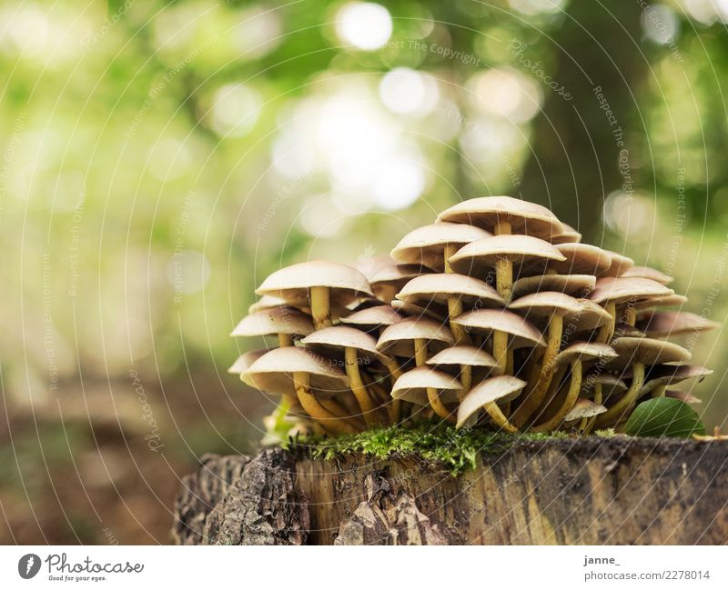 mushrooms Nature Plant Autumn Forest Yellow Green Mushroom Colour photo Close-up Deserted Copy Space left Copy Space top Day Light Sunlight Worm's-eye view