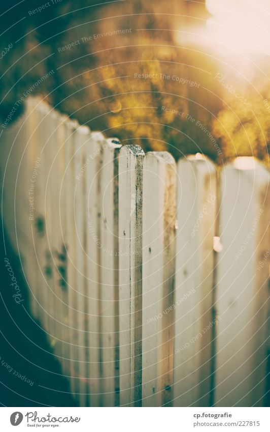morning Nature Plant Sunlight Autumn Beautiful weather Bushes Garden fence Fence Morning Day Contrast Sunbeam Back-light Shallow depth of field Blur White