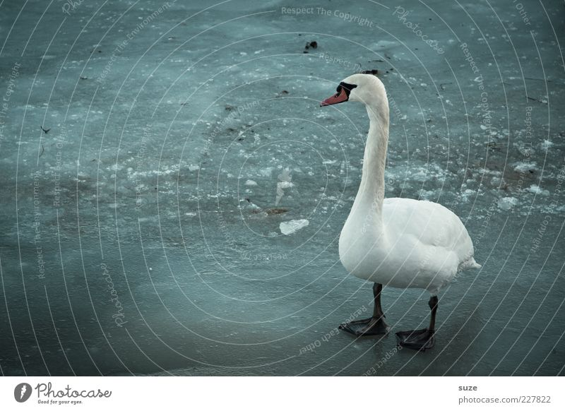 Blue White Animal Loneliness Winter Environment Dark Cold Gray Bird Ice Climate Wild animal Stand Feather Frost