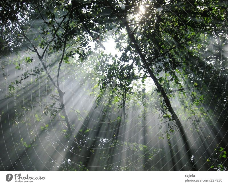 Nature Tree Plant Sun Leaf Forest Environment Moody Esthetic Hope Illuminate Branch Peace Beautiful weather Radiation Parallel