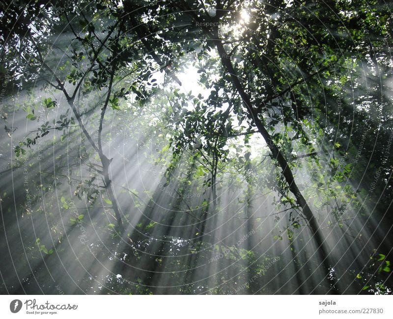 sunrays Environment Nature Plant Sun Sunlight Beautiful weather Tree Forest Illuminate Esthetic Moody Peace Hope Sustainability Atmosphere Parallel Radiation