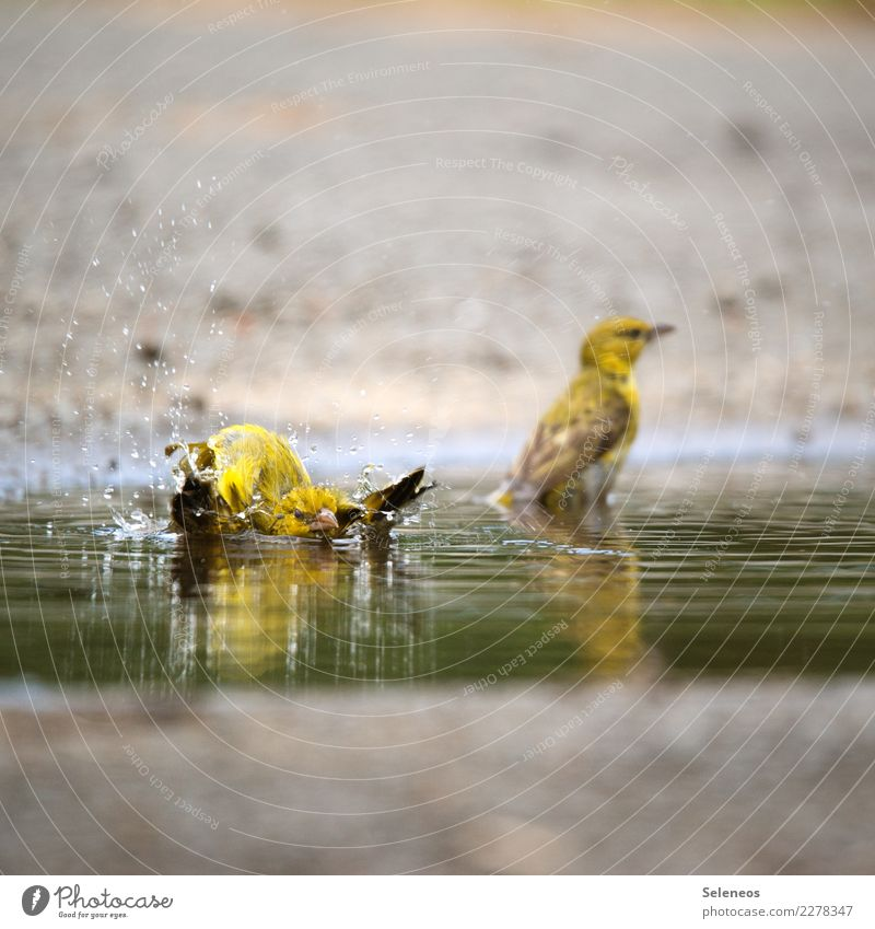 Nature Water Animal Environment Natural Bird Swimming & Bathing Wild animal Drops of water Wet Ornithology