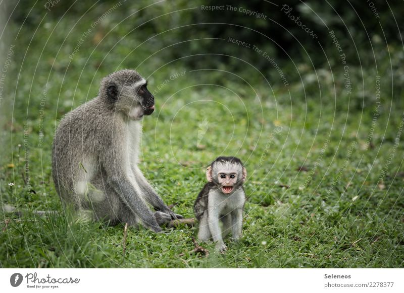 little pest Vacation & Travel Tourism Adventure Far-off places Freedom Safari Expedition Summer Environment Nature Animal Wild animal Animal face Monkeys 2