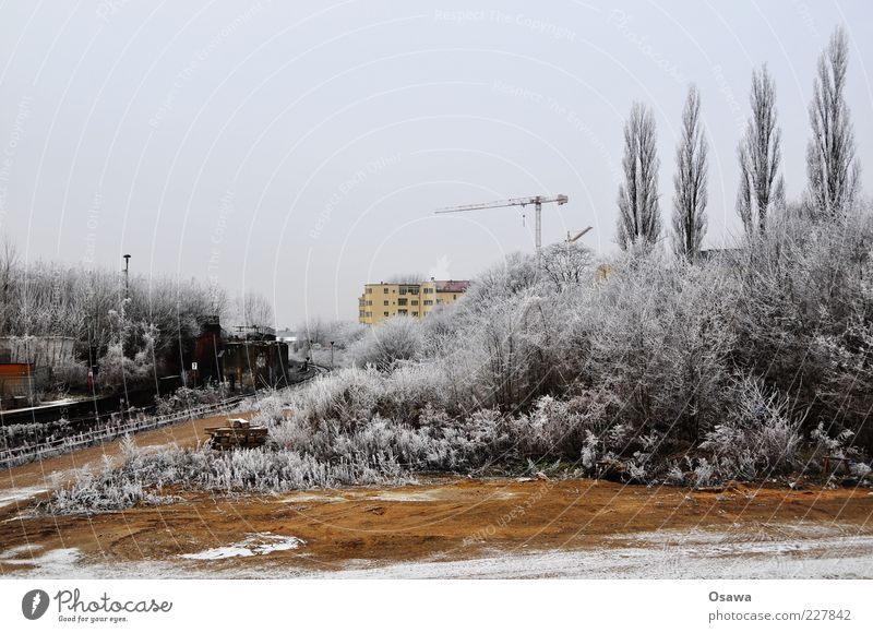 ice fog Tree Bushes Hoar frost White Gray Crane Building House (Residential Structure) Fallow land Ostkreuz Cold Winter Snow Sky Deserted